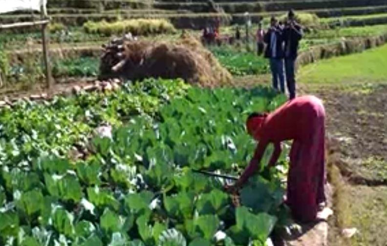 कपिलवस्तुको किसान मर्कामा, तरकारी बिक्री गर्न नपाउँदा दैनिक खर्च जोहोगर्न समस्या